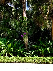 Nature (LarryJay99 ) Tags: nature plants green westpalmbeach florida photostream foliage orchids iphone6plusbackcamera415mmf22