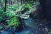 old and new (TSET0147) Tags: canon canon35l14 canon7d canonef35mmf14lusm 35l 35mm 35mml14 wald water wasser wandern baum niederösterreich natur noflash nature festbrennweite prime primelens redring llens landschaft landscape loweraustria
