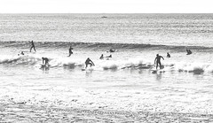 Black knights of the surf (geemuses) Tags: manly manlybeach shellybeach fairybower manlyheights longreef scenic landscape water sea ocean sand beach headland promontory surf surfing surfers scenery nsw newsouthwales bandw bw blackandwhite black white monochrome dog canine dogs pets people person girl men women street streetphoto