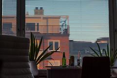 Outside my window (fredrik.gattan) Tags: window livingroom room chairs house view sunset warm dof beer bottle blinders table