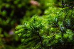 Fern - 01 - Enchanted Forest (Cristian González Photography) Tags: patagonia chileanpatagonia visitchile visitsouthamerica green nature natureperfection naturebrilliance forest fern nothofagus greenforest tr trekking travelling