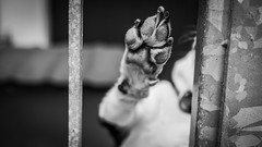 High Five! (voxpepoli) Tags: