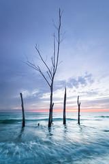Secluded Beach on Longboat Key (justenoughfocus) Tags: sonyalpha florida landscapephotography longboatkey manateecounty sea seascape trees unitedstates us