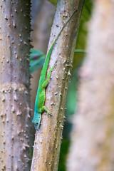 L I Z A R D (frank-heinen-photographer) Tags: jungle fujifilm xt2 bush outdoor © wwwfrankheinenphotographerde burgerszoo xf55200mmf3548 r lm ois travel echse lizard rainforest zoo tropen regenwald tropical nature fujifilmxt2 xf55200mmf3548rlmois ©wwwfrankheinenphotographerde