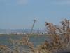 Immersed antennas (Nikos Karatolos) Tags: kalochori thessaloniki delta axiou greece mussel houses abandoned samyang 50mm f12