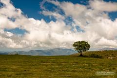 _MG_0328 (antocalv) Tags: bosco canfaito faggeto hiking montesanvicino trekking