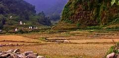 NEPAL, In Pokhara, Unterwegs im Phewa Tal, 16098/8374 (roba66) Tags: reisen travel explore voyages roba66 visit urlaub nepal asien asia südasien pokhara landschaft landscape paisaje nature natur naturalezza fields rural meadow stones