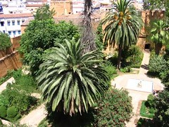 Chefchaoun Morocco (faicaljalal) Tags: palme chefchaoun chaoun jardin maroc morocco marocco