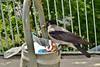 Crow Врана DSC_0062 (Me now0) Tags: crow врана europe софия следобед софиябългарияевропа никонд5300 китовобектив 1855mmf3556 afternoon пролет spring nikond5300 basiclens park