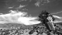 Batalla, Puno, Peru (JMRDiaz) Tags: countryside puno peru farmer women titicacalake