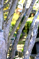 Secret Garden (tiger289 (The d'Arcy dog supporters club)) Tags: eastpreston westsussex villagegreen dogs penangvillagerestaurant flowers trees beach waves breakwaters sea searoad sealane heraldry architecture clockhouse clocktower plaques villagelife cars boules twoacres oakleygardens