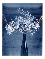 gypsophile (JJ_REY) Tags: gypsophile fleurs flowers instantfilm fuji fp3000b peelapart toyofield 45a sironarn 150mm epson v800 colmar alsace france
