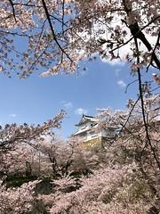 2017 Tsuyama spring (shinichiro*) Tags: 津山市 岡山県 日本 jp 20170413img7010 2017 crazyshin appleiphone7plus iphone sakura cherryblossoms tsuyama okayama japan 33831996660