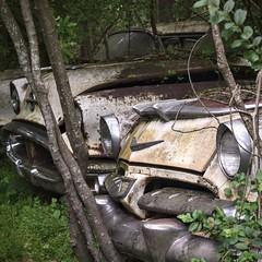 Front Bumpers (Vessira) Tags: junkyard northgeorgia abandonment vintage cars georgia rust oxidization rusty classic wreck car ga rustyandcrusty