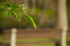 Bench in the Bokeh (Bud in Wells, Maine) Tags: rogerspark kennebunk maine spring bench bokeh green leaves dof