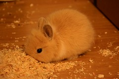Zucca ! (Francesca Ricci Nature & Life) Tags: coniglio bunny rabbit red love cute animal sweet