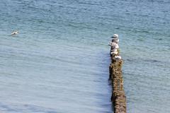 Ostsee in Kühlungsborn (t.tower) Tags: ttower ostsee kühlungsborn möwen wasser buhne