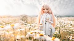 Lost Field (帝王赤) Tags: shokuhou misaki heero nikon d810 landscape doll bjd dollfie dream japanese toy shanghai blond volks dd animate cartoon jfigure bfigure