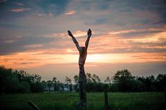 Reach the sky (Ir3nicus) Tags: nikon d700 dslr fullframe deutschland germany niederrhein outdoor sculpture wooden wood countryside meadow sky sunset sun clouds arms hands man holzskulptur sonnenuntergang wiese himmel wolken afsvrmicronikkor105mm128gifed