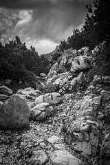 A Rocky Path (Dominique Knobben) Tags: landscape mountains nature travel stones contrast clouds road path rocks beautiful natural texture blackandwhite white monochrome black landscapes stone germany shadows mountain earth track journey hiking rocky naturalworld naturephotograph trees