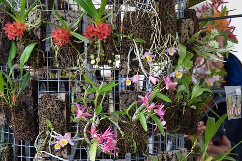 Orchideen Kopf flickriver douneika s photos tagged with orchideen