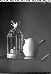 liberté… (JJ_REY) Tags: liberté arbres freedom oiseaux birds largeformat 4x5 bw polaroid t55 toyofield 45a rodenstock sironarn 150mmf56 epson v800 colmar alsace france