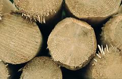 10-image022 (hemingwayfoto) Tags: fichte forstwirtschaft holz natur sauerland