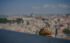 Toledo's full of slopes (crisgarr) Tags: snail caracol city portrait toledo spain animal retrato