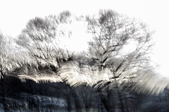 sundogs (Valerie Guseva) Tags: trees abstract light lights long exposure surreal icm impression russia smooth smudge hypnotic nature line illusion blur focus black minimalism grey lightpainting white shine deepness ngs dream dreamy calm blurred memory past painterly twop contemporary contrast unconscious movement drawing graphic shadow modern last experimental flow expression strange dark blackandwhite blackwhite evening far tree fire mysterious magic lost woods heavy grain haze death forest forward monochrome fog saintpetersburg sun sunbeam