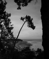 151227IMGP7734 (aureliedumartin) Tags: borddemer villages de pêcheurs cap ferret noir et blanc seaside