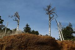 Oceanside, Oregon beach (nikname) Tags: oceansideor oceanside oceansidebeach oceansideorbeach oregonbeaches netartsbay netartsbayor pacificnwbeaches oregoncoast sandybeaches rockybeaches rocks trees rockyhillsides hilsides