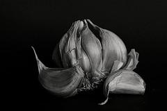 Allium sativum (Mr.White@66) Tags: monochrome bw bnw blackandwhite biancoenero garlic stilllife closeup fujifilm fujifilmx100f schwarzweissfotografie