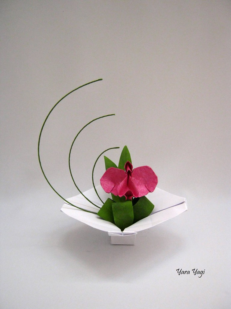 the worlds best photos of orchid and origami flickr