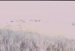 (amelia.seddon) Tags: film fujisensia landscape overexposed sicily europe italy wheat summer sunshine slidefilm farm pentax bleached