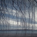 Dangling Branches at Cherry Beach (Toronto, Ontario)