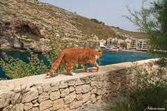 IMG_9830 (alberto.gentile89) Tags: redcat cat malta holidays me canon eos 7d polarizing sea seascape nature hoya colors spring travel