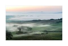 Mandria Di Chianina / Cattle Herd (W.Utsch) Tags: landscape landschaft fog nebbia broullard nebel sony 70400 a7r2 tuscany toskana toscana italia morninglight sonnenaufgang misty mysty pastorale painting