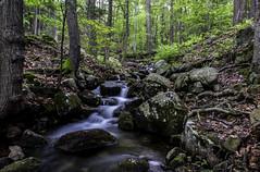 Harriman State Park, New York (superpugger) Tags: stream spring harrimanstatepark newyorkstate harriman brook springrunoff water movingwater canong1xmarkii forest woods trees landscape springlandscape lpugliares lawrencepugliares