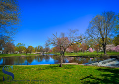 Spring Looking over the Upper Duck Pond (Singing With Light) Tags: 2016 2017 23rd alpha6500 april ct duckpond event milford mirrorless singingwithlight springcolors upperduckpond walkamileinhershoes a6500 downtown photography singingwithlightphotography spring