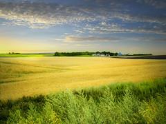 The farm (mrbillt6) Tags: northdakota rural prairie landscape field grain grass outdoors country countryside