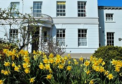 Door Side Queen (Esther Spektor - Thanks for 12+millions views..) Tags: england building architecture flowers daffodil spring doorside lakedistrict plant tree window door facade balcony greatbritain daylight white green yellow blue estherspektor canon