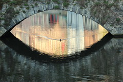 Shrunken pupil (Croix-roussien) Tags: belgium brugges reflection duck canard reflet pont bridge oeil pupille urban magic ngc cof074uki cof074dmnq cof074mark cof074holl cof074mari cof074mcas cof074chri