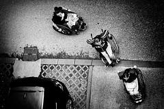 train of hope (Zlatko Vickovic) Tags: streetstreetphoto streetphotography streetphotographybw streetbw streetphotobw blackandwhite monochrome zlatkovickovic zlatkovickovicphotography novisad serbia vojvodina srbija