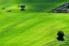 Scorcio primaverile (luporosso) Tags: natura nature naturaleza naturalmente nikon nikond500 nikonclubit nikonitalia imdifferent scorcio scorci country countryside campagna campi alberi trees verde green primavera printemps spring