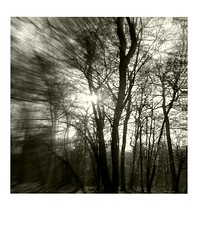 DIAP WOOD 005 (Dominiq db) Tags: diapo séries wood trees arbres forêt nature