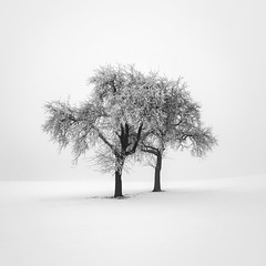 immaculata conceptio (ArztG.|Photo) Tags: deep harsh winter mood treees clean square long exposure yup arztg|photo fog cheers myfavs