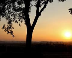 Silhouette (elianek) Tags: sunset pordosol brasil brazil saojosedoscampos silhouette silueta sombra sol sun nature natureza
