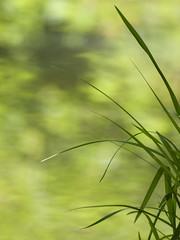 La couleur de l'eau *----+°---° (Titole) Tags: grass water titole nicolefaton green 15challengeswinner perpetual challengegamewinner