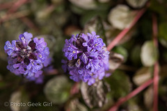 Day 119: Purple Flowers