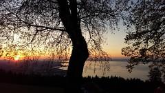 The view (bischofbrigitte) Tags: handyfoto switzerland grubsg fünfländerblick lakeconstance bodensee sonnenuntergang sunset